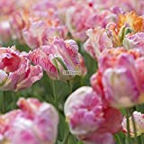 Soteer Garten-10/20 stück Tulpen Samen Bunte Blumensamen Bonsai Tulpen Winterhart Mehrjährig für Garten Balkon/Terrasse