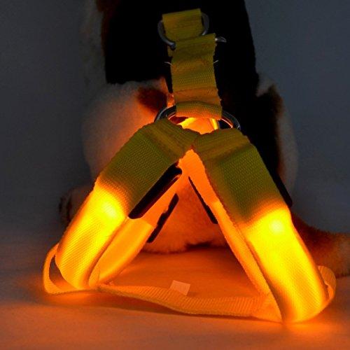 Leine LED Blinklicht Geschirr Hunde Haustier Sicherheits Kragen Verstellbare Sichere Beleuchtung -