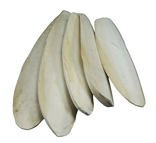 "Large Natural Cuttlefish for Birds, 5.5 to 8"" (13-20cm), Pack of 5, by Britten & James 4"