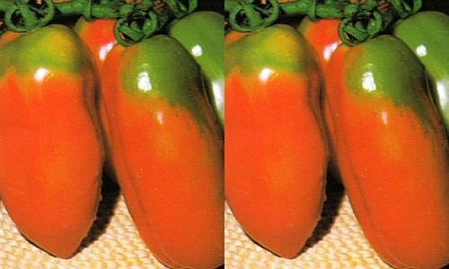 Tomate Scatolone 2 - tomate - 50 graines