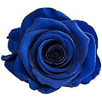 ETERNAL ROSES XL Rosenkopf, konserviert, Farbe Blue