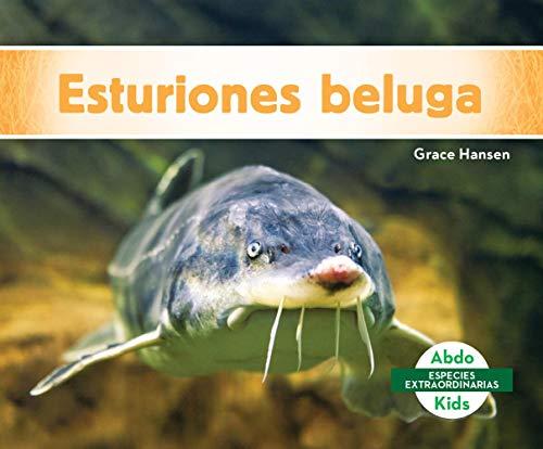 Esturiones beluga / Beluga Sturgeons (Especies Extraordinarias)