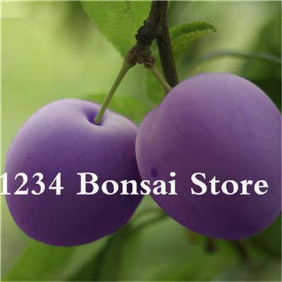 Bloom Green Co. Haute qualité 20 pcs Rare Noir Brin prune Bonsai fruit délicieux douce bio arbre & quot; krim noir & quot; Légumes et fruits Plante en pot: 12