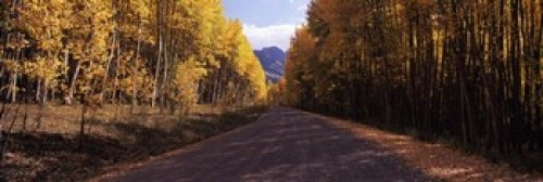 The Poster Corp Panoramic Images - Trees both sides of a dirt road Jackson Guard Station Owl Creek Pass Ridgway Colorado USA Photo Print (91,44 x 30,48 cm) - Owl-guard