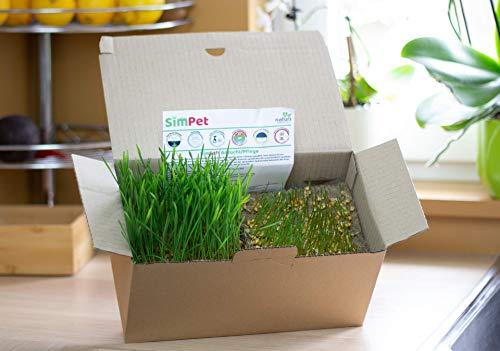 simpet Katzengras SimSoft(Nachfüll Pack für Katzen Gras SimBox) Frisch, Fertiggewachsen, Verzehrfertig