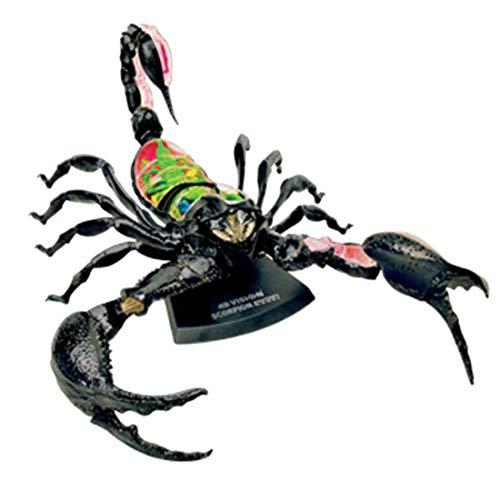 Ggoddess 29Pcs 4D simuliertes anatomisches Modell, Skorpion Tierisches Organmodell, Medizinische Erziehungswissenschaft Montagemodell -