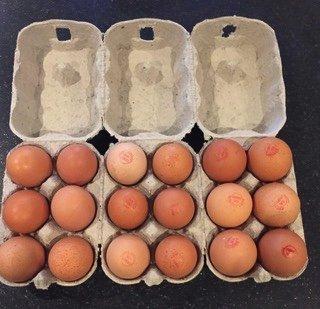 30 1/2 DOZEN NEW GREY EGG BOXES Test