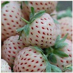 Ananas-Erdbeere 20 Samen, weiße Erdbeere Samen