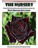 Visa Store 2018 heißer Verkauf Davitu Black Baccara Rose Samen, 50 Stück, Professional Pack, duftenden mehrjährige Hausgarten
