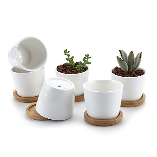 T4U 6.5CM Keramik Sukkulenten Töpfe Kaktus Pflanze Töpfe Mini Blumentöpfe mit Bambusuntersetzer Runde Weiß 6er Set