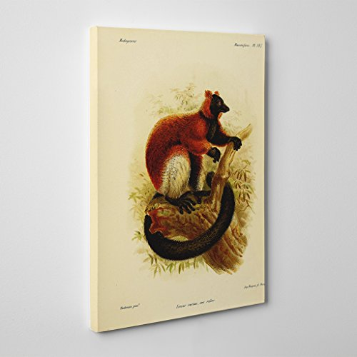 BIG Box Art Vintage J.g. Keulemans Red-Ruffed Lemur 2