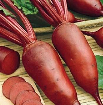 ANVIN Keimfutter: 1.000 Rübensamen Cylindra Rübensamen Gemüsesamen 60 Tage