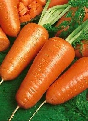 100CT des semences de carotte, Chantenay à cœur rouge, Heirloom graines de carotte, non-ogm, délicieux
