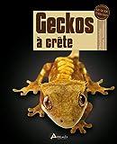 GECKOS A CRÊTE