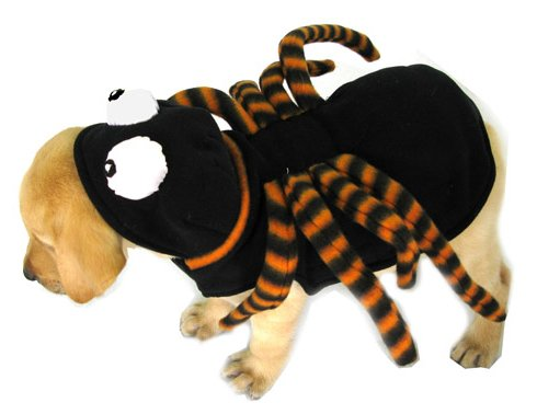 HALLOWEEN - Hund Kostüm, Spinne in schwarz & lila mit langen biegsamen Beinen und großen Augen auf der Motorhaube. Groß für Parteien und Süßes oder Saures! Größe 18