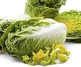 Bobby-Seeds Bio-Salatsamen Little Gem Romanasalat BIO Portion