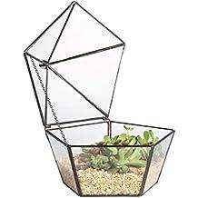 dingsheng artístico moderno cristal transparente joyería Box Forma de pentágono suculentas musgo verde planta geométrica maceta pantalla de mesa centro de mesa decoración jardín DIY jarrón con tapa basculante