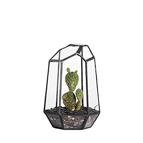 RCIN Glas Geometric Terrarium, Pflanzenhalter, Box Indoor Tabletop Sukkulenten Blumentopf Balkon Fensterbank Display Pflanzgefäß Moosfarn Container, 10 * 10 * 15 cm -