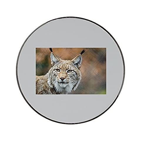 Metal round fridge magnet with Lynx, Bobcat, Wildlife, Predator, Nature (Bobcat Lynx)