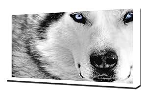 Le Loup Arctique - Image Sur Toile