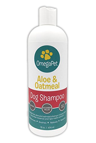 Dog-Shampoo-for-Itchy-Skin-The-Best-Smelling-Cat-Shampoo-Long-Lasting-16-oz-Oatmeal-Aloe-Shea-Butter-Rich-Lather-and-Easy-Rinse-Conditioner-for-Soft-Skin-and-Shiny-Fur