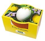 Geschenkidee Witzige Ostergeschenke - Minipflanzset Eierbaum