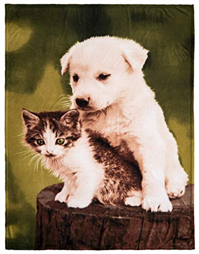 Brandsseller Tiermotiv Decke Kuscheldecke Tagesdecke Wohndecke 150x200 cm Motiv: Hund-Katze