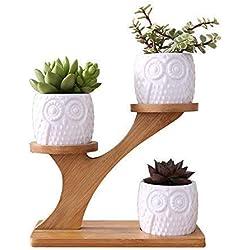 LINGLAN 1 Ensemble de chouette en céramique Pots Pot de Fleur en Céramique de Forme Rond /et Plateau de Bambou/Pots de Cactus/Plante en Pot/Cultiver 1 Paquet de 3