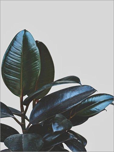 Zimmerpflanze Halbschatten, Sonne