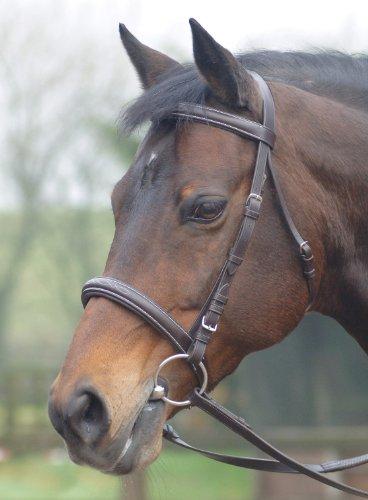 Cambridge - Briglia per cavalli con redini in gomma, diversi colori e misure disponibili, Marrone (havanna),