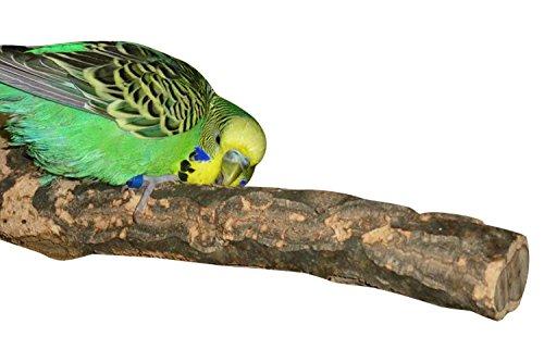 NUR HIER: KORK-Sitzstange für Vögel. Die perfekte Kombination von Knabberspaß und Krallenpflege