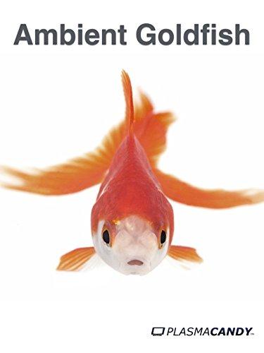 ambient-goldfish