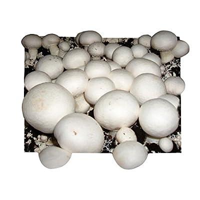 Bio Champignon Pilzzuchtset - Pilze selber züchten von Pilzmaennchen auf Du und dein Garten