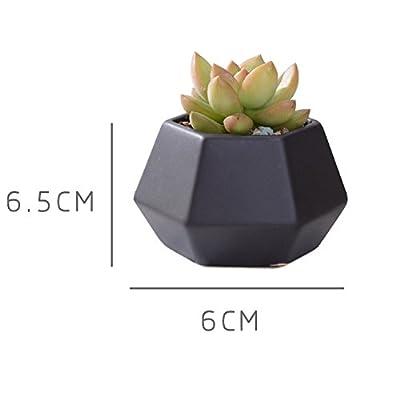 Kupfer Keramik sucuulent Blumentopf/Modern katzenwels Blumentopf Set von 5,1–7,6cm von Easma auf Du und dein Garten