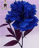Shopmeeko Echte Chinesische Pfingstrosen blühen, damit der Garten Topfpflanzen Seltener Schöner Bonsai-Baum pflanzt Innenpflanzen 10 Stück: Pflaume
