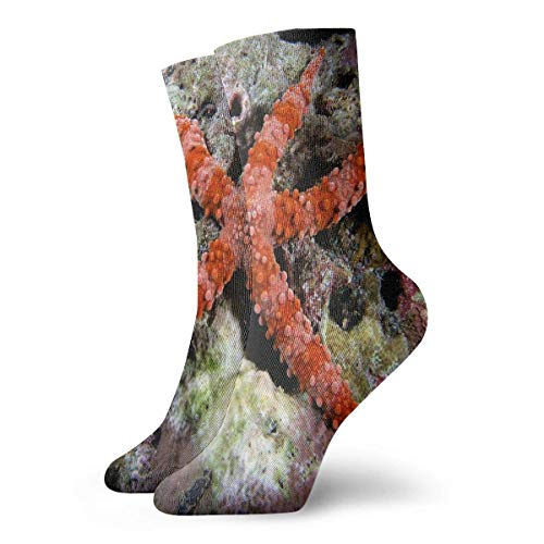 REordernow Sportliche Herrensocken Crew Socks Sea Star On Pinterest Fabulous Mens Short Boot Stocking Gift Sock Clearance for Youth