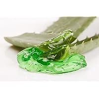 Gel Puro di Aloe Vera Fresca 1000 ml. - Dopo la rasatura e la depilazione - Idratante Viso e Corpo - bleumarine Bretania