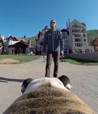 Cani supporto cani tracolla per fotocamera GoPro