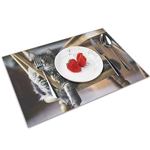 WITTN Platzdeckchen mit brauner Katze auf Holz Windsor Stuhl, waschbar, rutschfest, für Küche und Esstisch, leicht zu reinigen, PVC, 30,5 x 45,7 cm, 4er-Set -