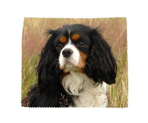 Cavalier King Charles Spaniel Hund Weiche Mikrofaser Gläser Objektiv Display Reinigung cloth-design No1
