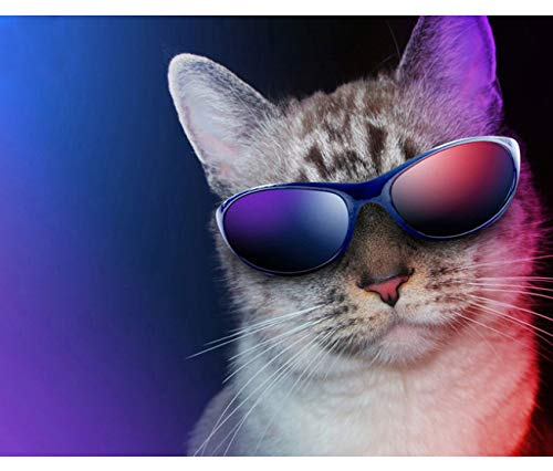 LYDXD DIY Icon 5D Diamant Malerei Kits Tier Katze Mit Sonnenbrille Diamant Mosaik Voller Diamanten Stickerei Hand Kreuzstich Wohnkultur 40X50Cm