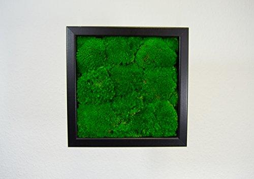 images murales, élaboration de murs, images de plantes, mur de mousse, Tableau de mousse 100%billes de mousse (noir, 25x25)