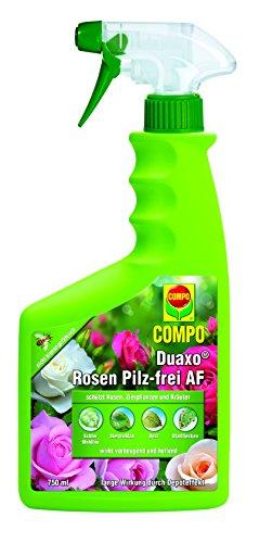compo-duaxor-rosen-pilz-frei-anwendungsfertiges-fungizit-spray-ua-gegen-sternrusstau-echten-mehltau-