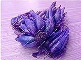 ASTONISH Erstaunen SEEDS: 16: Mini Onion Seed Heirloom Nicht-GVO-Gemüse-Samen Seltene Bonsai Pflanze DIY Hausgarten Haushalt Küche Würzen von Speisen 50 PC-16