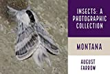 Insects & Arachnids: A Photographic Collection: Montana: United States (Arthropods of Montana Book 1) (English Edition)