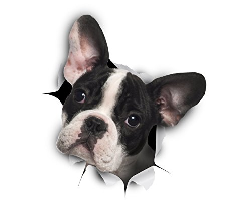 Winston & Bear -Pack 2 - adhesivos 3D Perro Bulldog Francés blanco y negro Stickers para pared, pegatinas de Frenchie de nevera