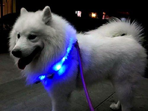 LED Dog Collar, LaRooTM Flashing LED Dog Safety Collar Rechargeable Light Up Pet Cat Safety Collar and Adjustable Size Fit for All Dog, Cat and Pets 5