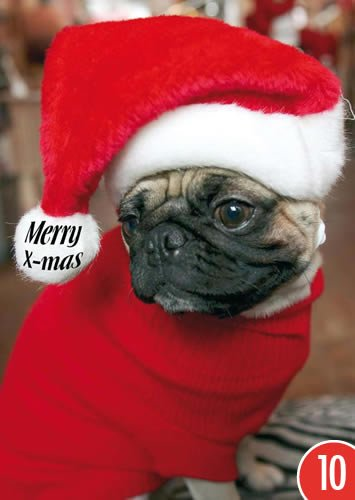 A6 +++ WEIHNACHTEN von modern times +++ MERRY CHRISTMAS DOGGY +++ ARTCONCEPT PICTURE ALLIANCE ()