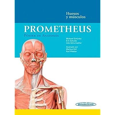 Free Prometheus. Poster De Anatomia: Huesos Y Musculos PDF Download ...