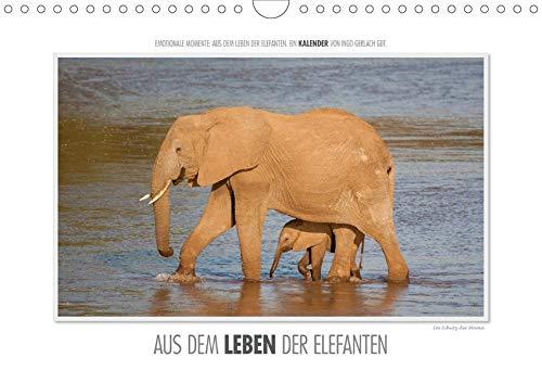 Emotionale Momente: Aus dem Leben der Elefanten. (Wandkalender 2020 DIN A4 quer):...
